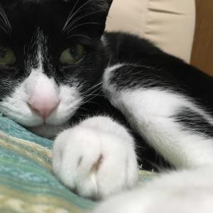 ネコの目って・・・(^^♪