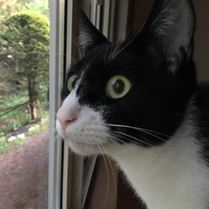 ネコが来た(^^♪ ㊿番犬?番猫?