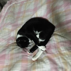 ネコが来た(^^♪ ㉜
