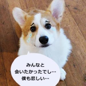 【大事なお知らせ】 Berryっ子ファミリーの皆さんへ