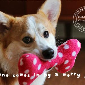 ご挨拶&Berryっ子ファミリーの皆さんへ。