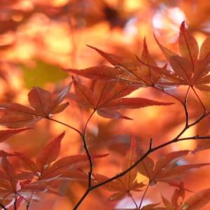 紅葉の季節は