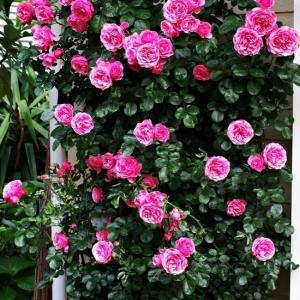 賑やかになってきた庭の様子。レオナルド、バイランドが絶好調。