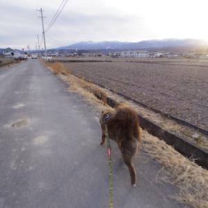 小海線沿いをクマ散歩
