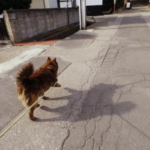 新海神社の駐車場までクマ散歩