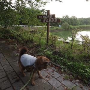 池をぐるっとクマ散歩