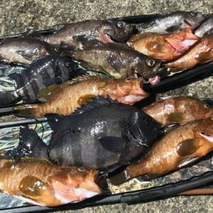 今期最後の日本海で魚突き【写真多め】