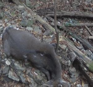 忍び猟で鹿を獲る難しさを改めて実感した1日【動画有】