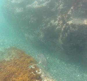 無人島で今年初の魚突き
