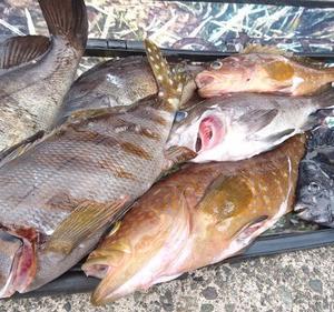 単独で日本海へ魚突き