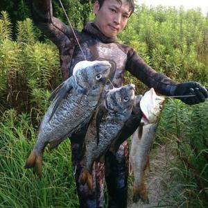 日本海の夜間魚突きで大物が!【写真多め】