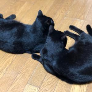 うちの黒猫たち