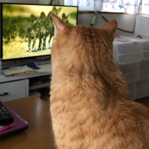 大自然の厳しさを学ぶ。テレビで(;´∀`)