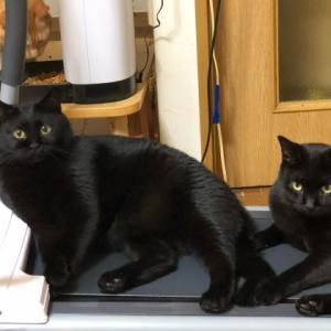 黒猫に占拠される