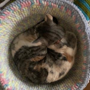 猫皿勢ぞろい