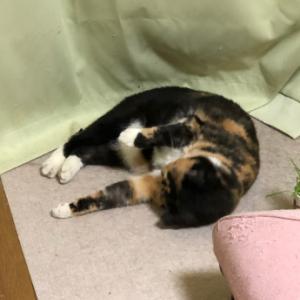 3猫ミチミチ