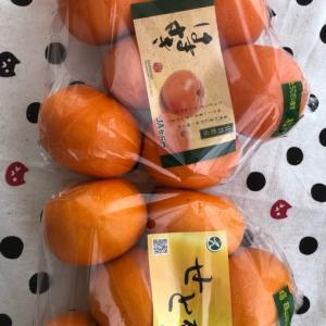 我が家の女子によります柑橘レポート
