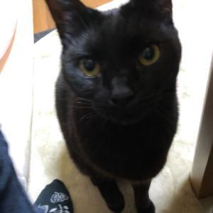 偽装黒猫? 黒猫詐欺?
