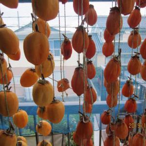 良い柿を見つけ再び干し柿づくりに励みました。