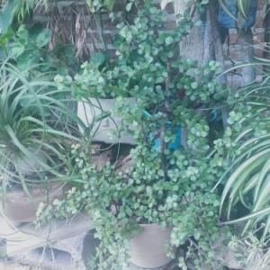 感動を分かち合う「富の木」