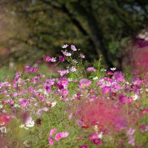 秋本番を宣言する花たち