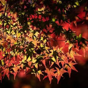 紅葉も祝福する仏前結婚式