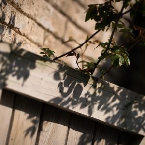 英国庭園の愁いを帯びた光蜥蜴