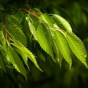 気が付けば新緑の季節