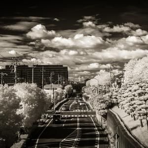 秋仕様の赤外線写真
