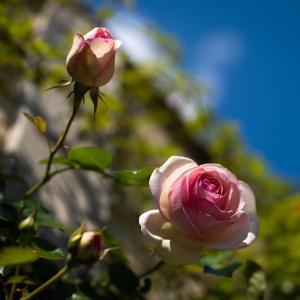 黄金週間の英国庭園