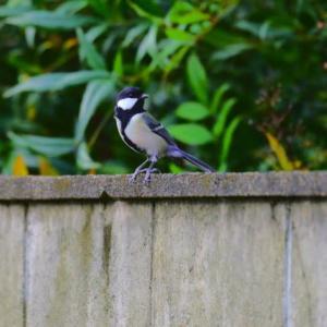 庭で見かけた鳥たち