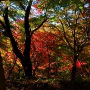 群馬・渡良瀬渓谷沿いの紅葉