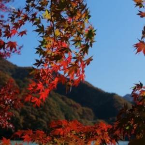 渡良瀬川沿いの紅葉