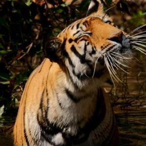 インドの動物/お助け画像