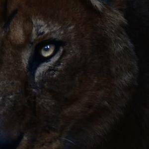 ライオン・チーターの親子/ケニア