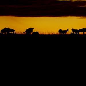 ケニア夕景