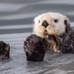 海獣たち/アラスカ 写真整理中