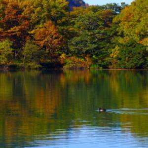 志賀高原の池/たくさんあるので志賀高原48池