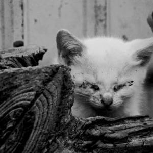 棄て猫/群馬