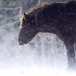 雪の中の動物/過去写真から