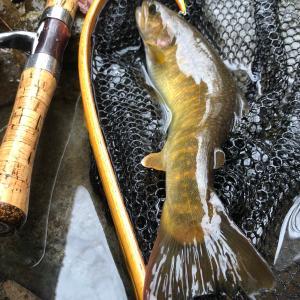 大イワナが釣りたくて尺イワナポイントに釣行したのだ!