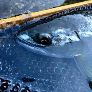 尺アマゴが釣れた!その川で西日本豪雨の影響を考えた。