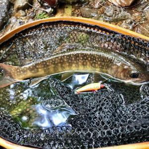夏の渓流ルアーの3Aに大苦戦。。。渓流釣りって難しい。