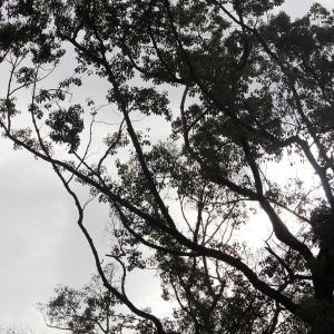 昨日の散歩 稲荷山周辺 No.177