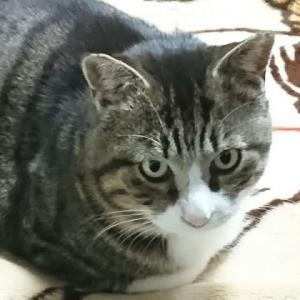そこに居る野良猫に不妊去勢手術をしてあげて下さい