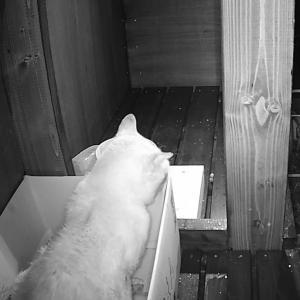 猫にも心の闇があるようです
