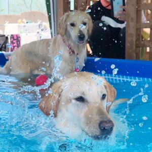 プールで遊ぼう!day2