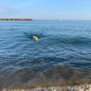 海の日には行かず