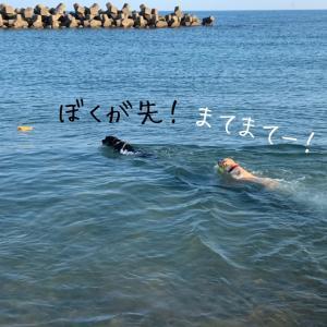 2日連続の海