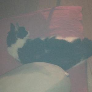 手術前抗がん剤休薬期間。猫のなつ。